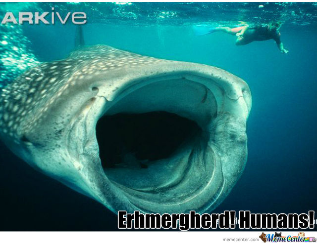 Enthusiastic Whale