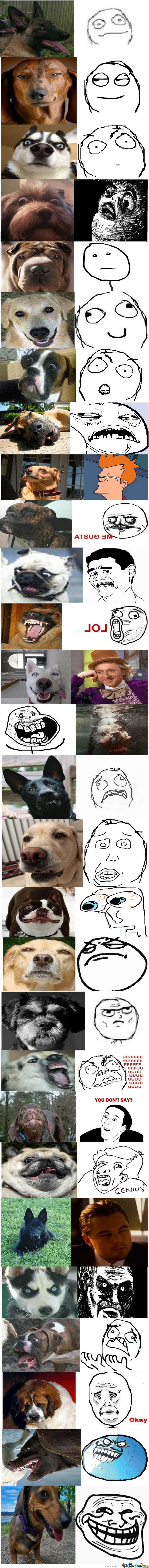 Epic Dogs