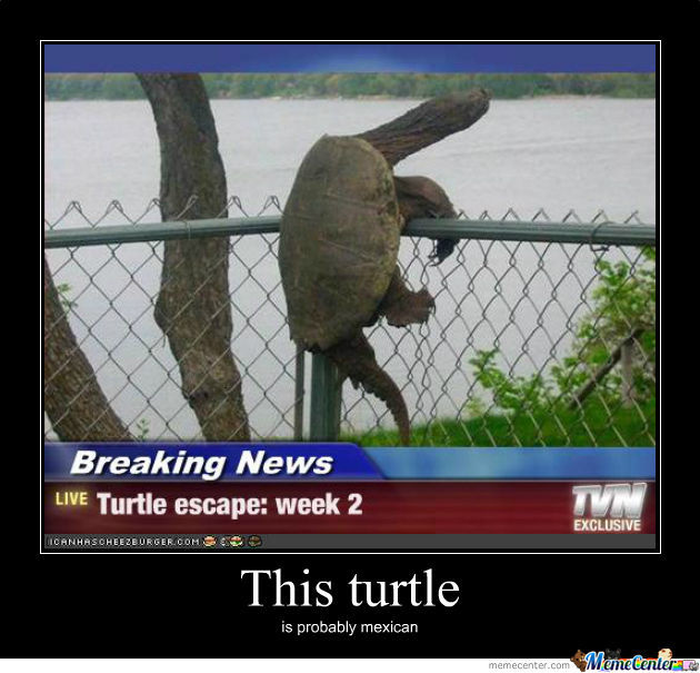 escaping turtle_o_502281 escaping turtle by justaguy123 meme center