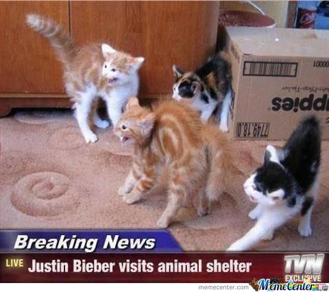 Even Cats Hate Justin Bieber?!
