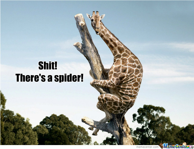 Even Giraffes Are Scared Of Spiders!