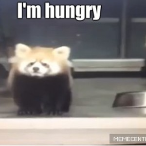 even red pandas get scared by lidord1999   meme center