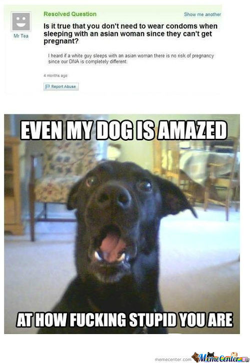 Even The Damn Dog Thinks You Are Stupid