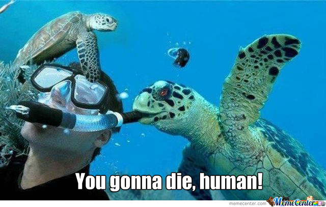 evil turtle is evil_o_1572891 turtle memes best collection of funny turtle pictures