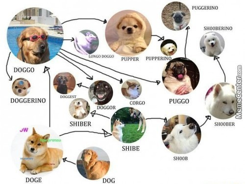 Evolution Of Doggo