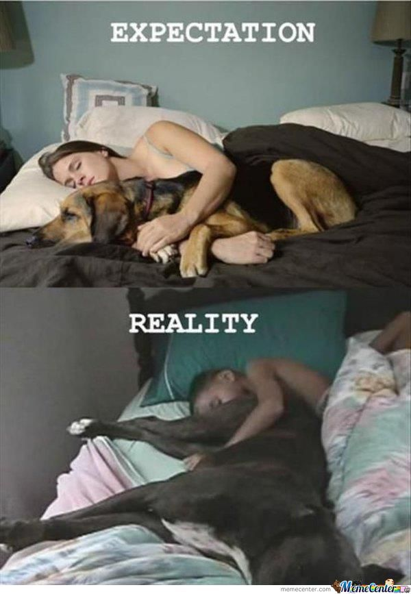 Expectations And Reality