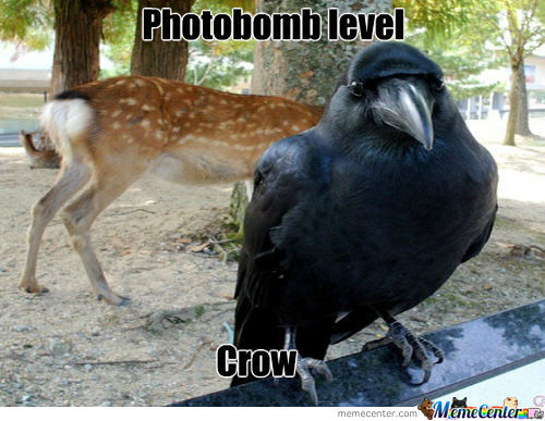 Fabulous Crow