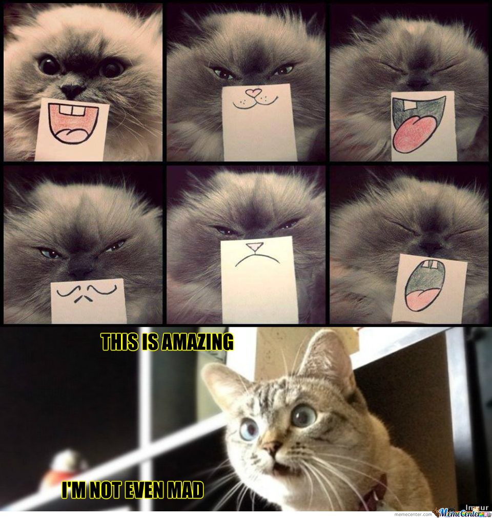 Facial Expressions For Cats