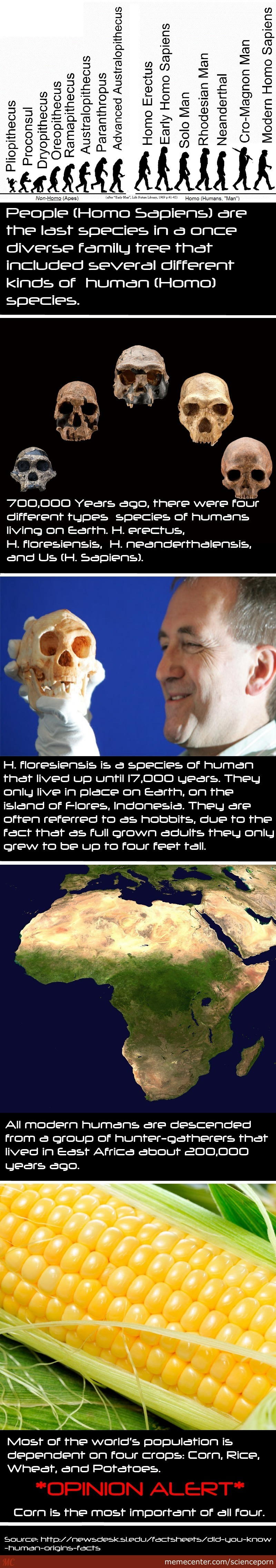 Facts About Humans