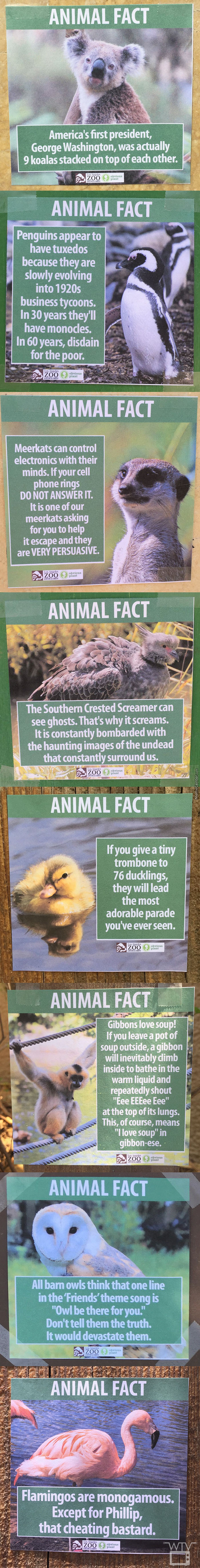 Fake Animal Facts Found At The Los Angeles Zoo On Thursday