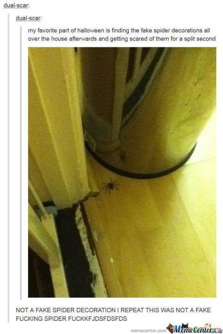 Fake Or Not, Dont Mess With Spiders
