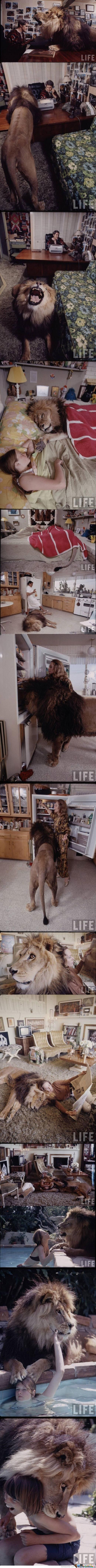 Family Living With Lion