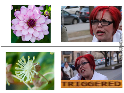 Feminist Gets Triggered By Flower.