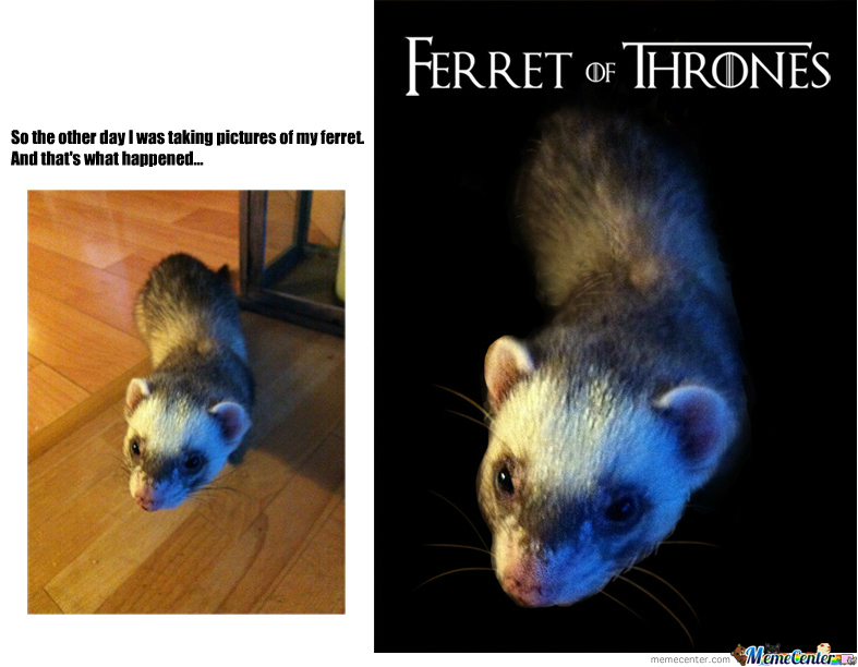 Ferret Of Thrones