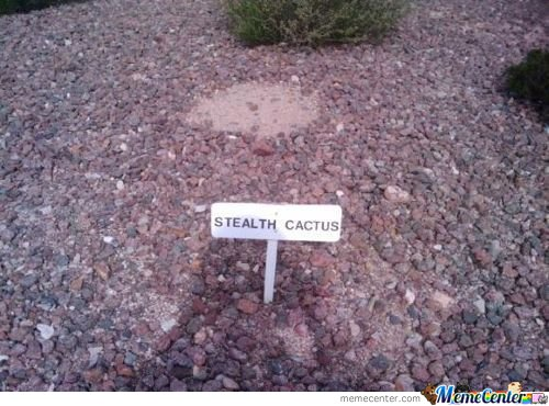 Find The Stealth Cactus