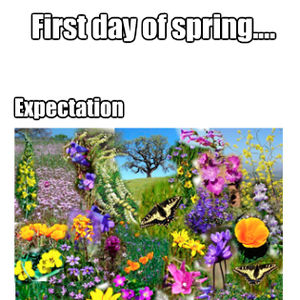 first day of spring_fb_1208540 first day of spring by recyclebin meme center