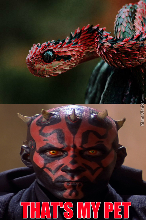 First Reptile Who Went To The Darkside