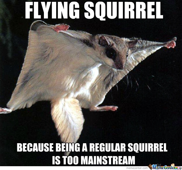 Flying Squirrel by JosephMcElrath - Meme Center