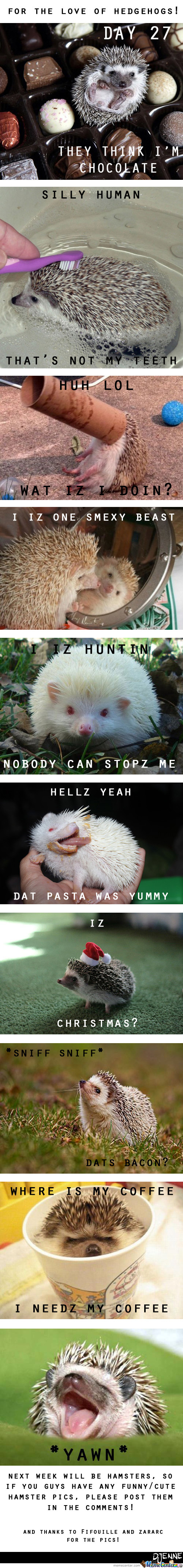 For The Love Of Hedgehogs!