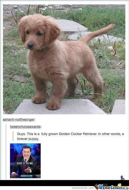 Forever Puppy