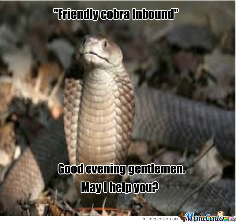 Friendly Cobra Is Friendly