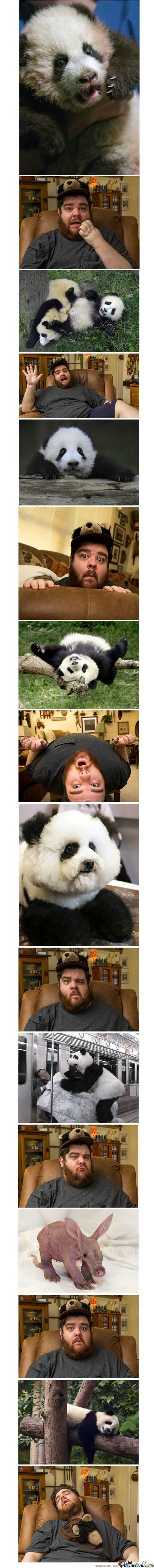 Frogman's Reactions To Pandas