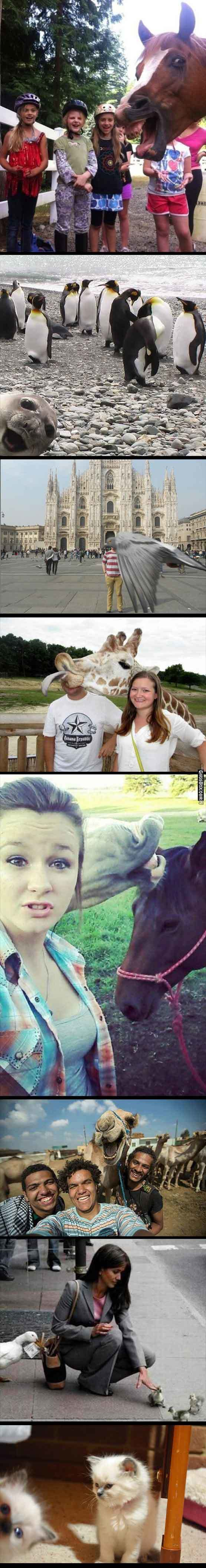 Funny Animals Photobomb Pictures Compilation