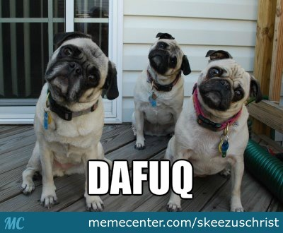 Funny Meme Expression : Funny dog expression by skeezuschrist meme center