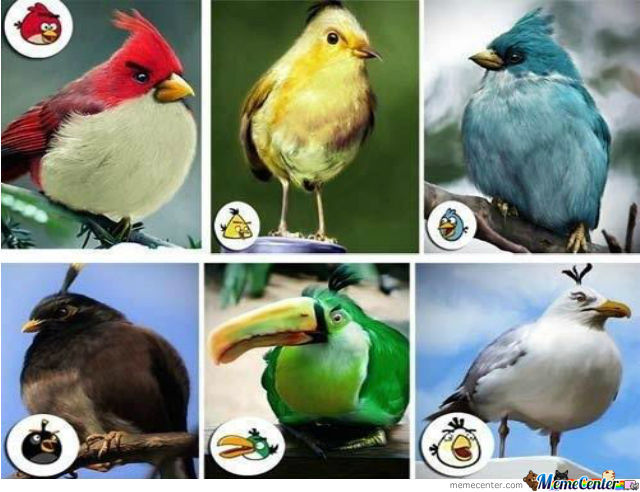 Game Angry Birds Vs. Real Angry Birds