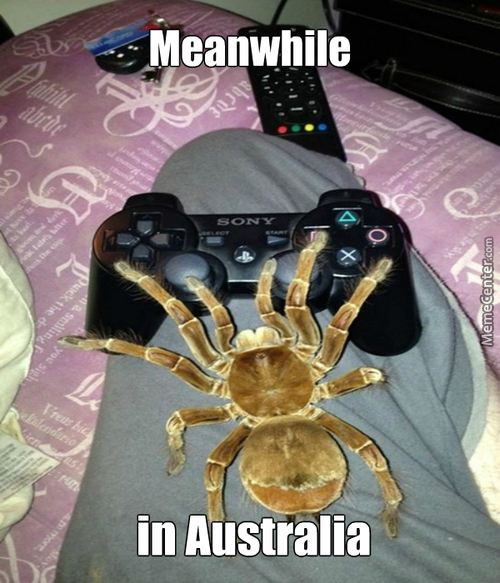 Gaming With A Spider