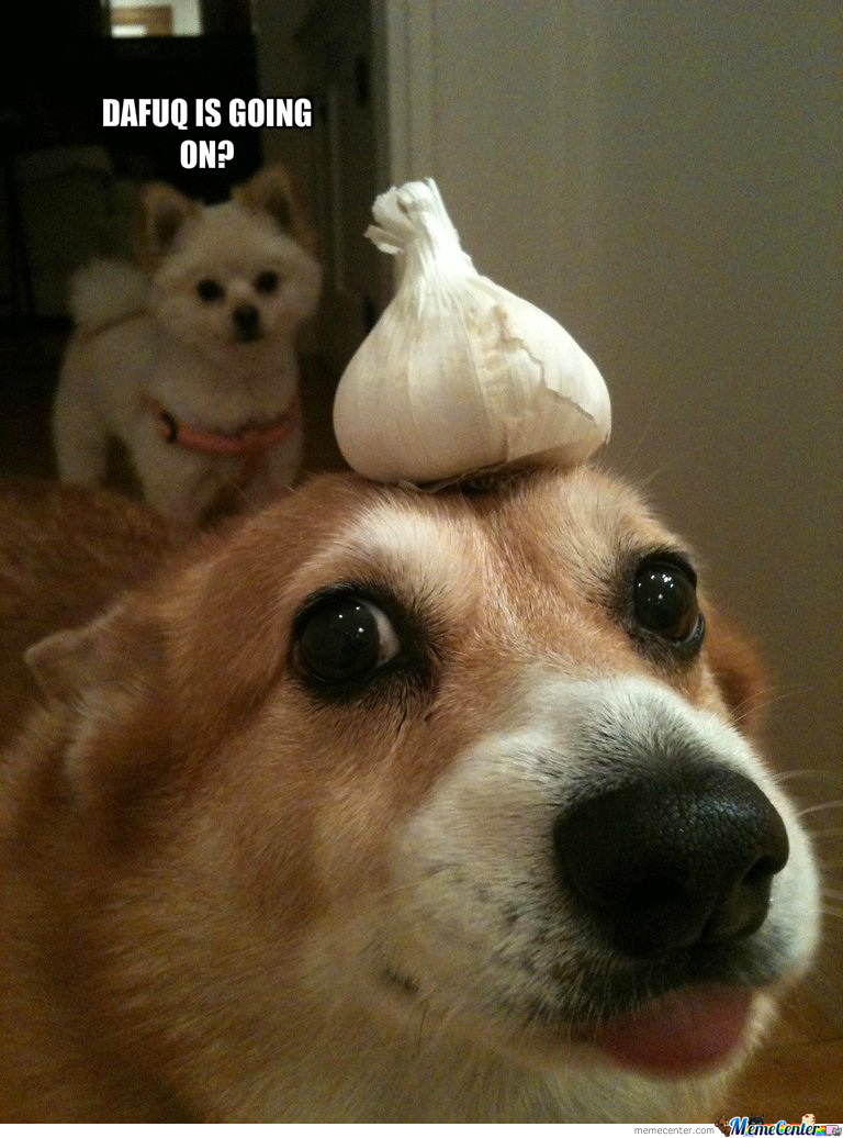 Can Dogs Have Garlic