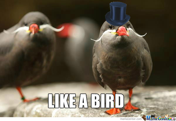 Gentlemanly Birds