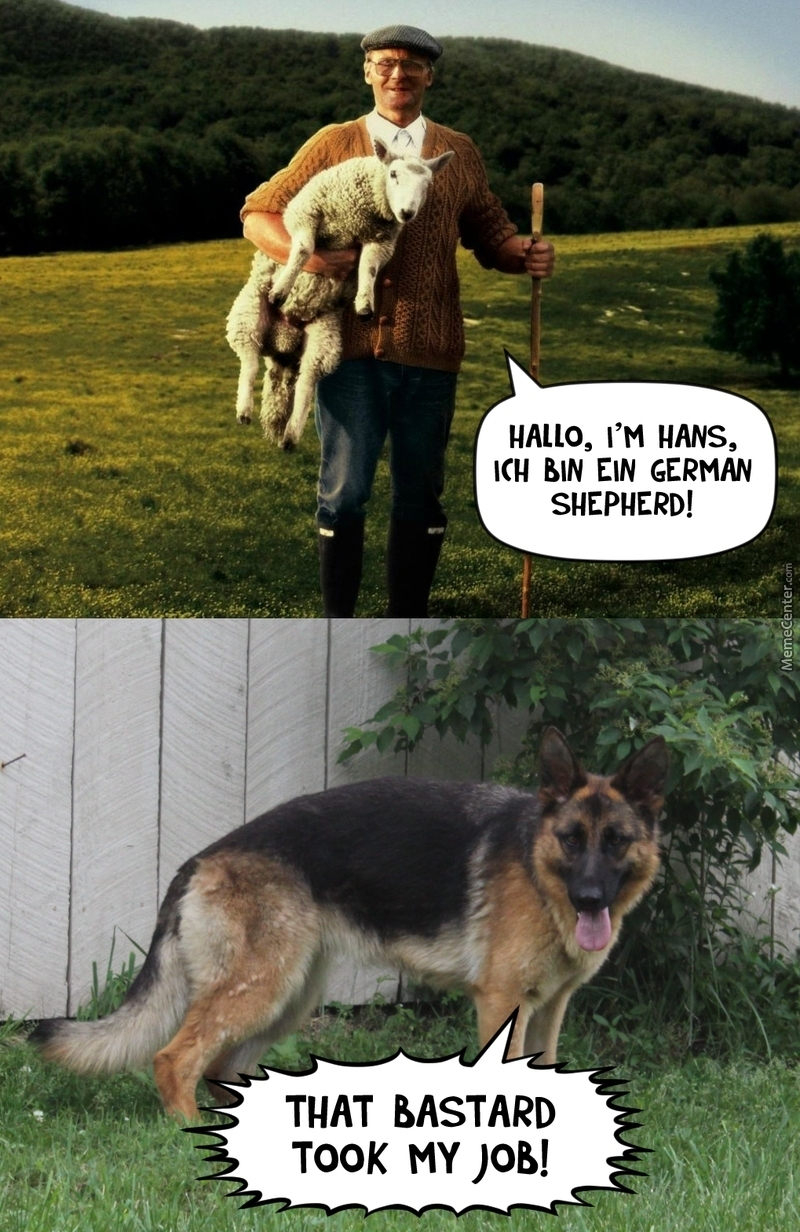 german shepherd_o_3224379 german shepherd by nedesem meme center