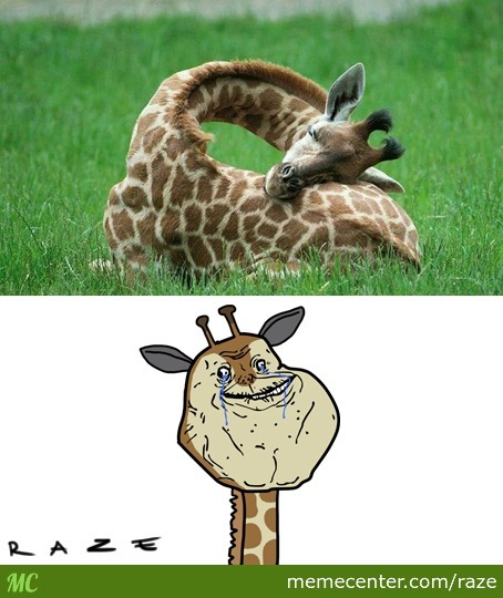 Giraffe Memes Best Collection Of Funny Pictures