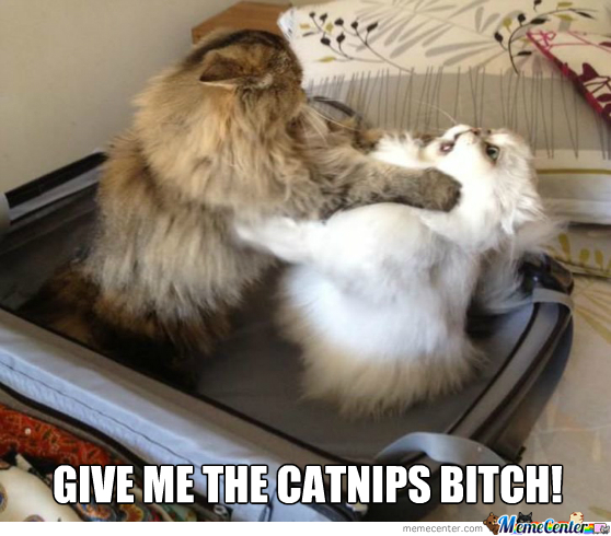 Give Me The Catnips Bitch!