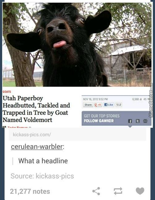 Go Home, Voldemort. You're Drunk. And A Goat.