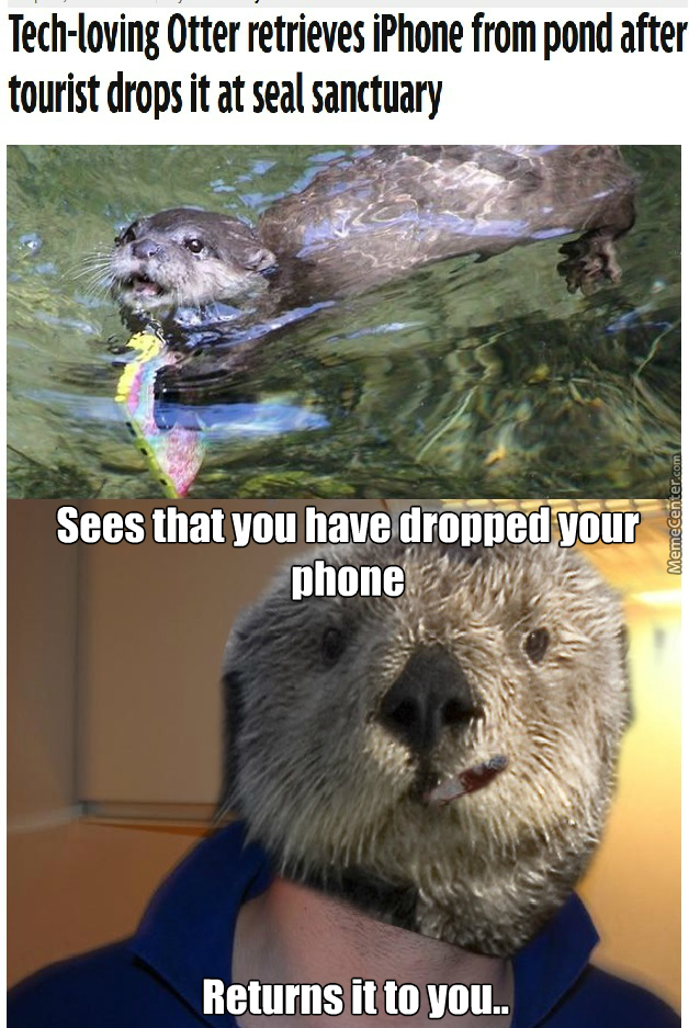 Otter Memes Best Collection Of Funny Otter Pictures