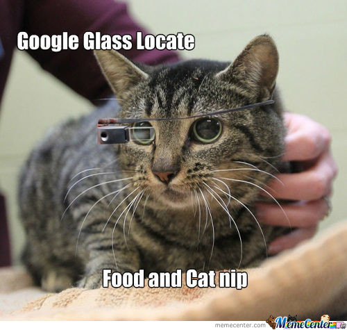 Google Glass For Cats