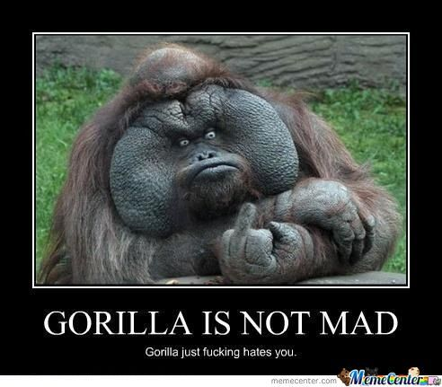 gorilla is not mad_o_707722 gorilla is not mad by pichi meme center