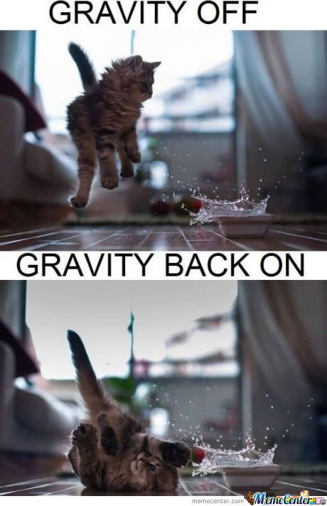 Gravity Defying Kitten