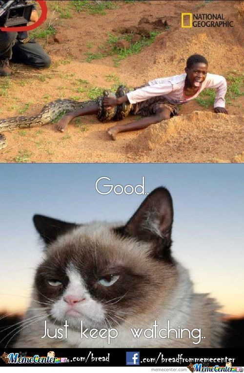 Grumpy Cat Approves National Geographic..