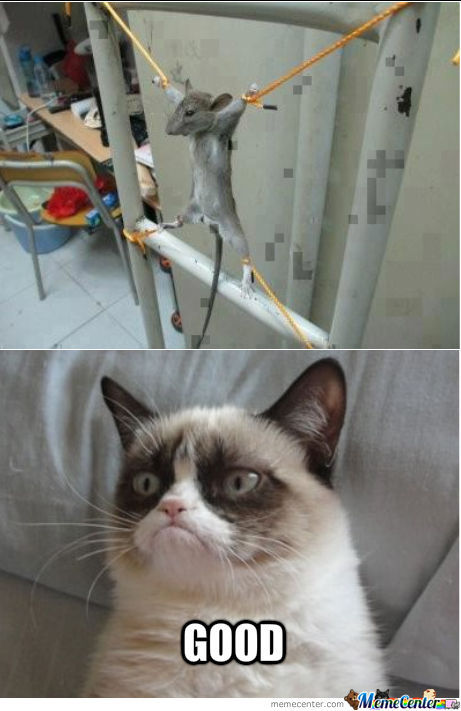 Grumpy Cat Approves.