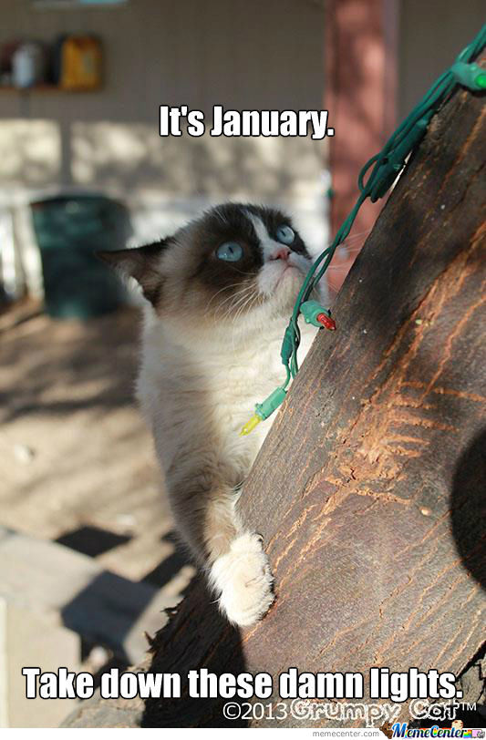 Grumpy Cat Hates Christmas Lights