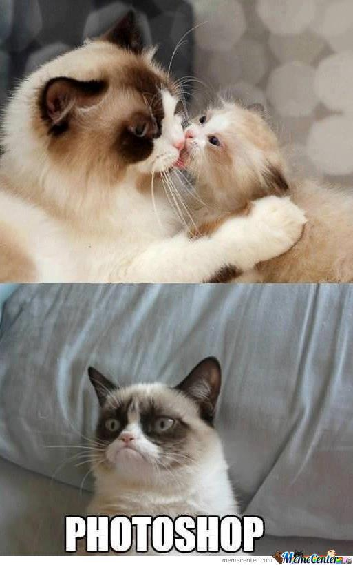 Grumpy Cat Is Not Amused by lolnek - Meme Center