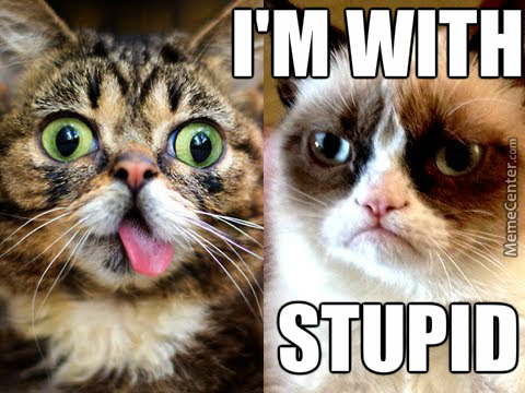Grumpy Cat Is With Stupid  by christopherlutz9564 - Meme Center