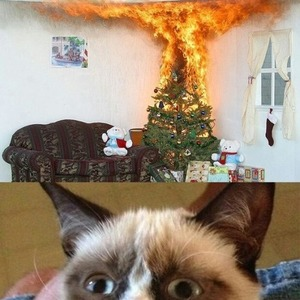 grumpy cat likes burning christmas tree by guest_12808 meme center