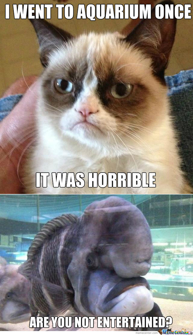 grumpy cat meets grumpy fish_o_1133014 grumpy cat meets grumpy fish by ben meme center