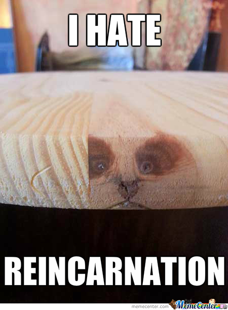 Grumpy Cat Reincarnation