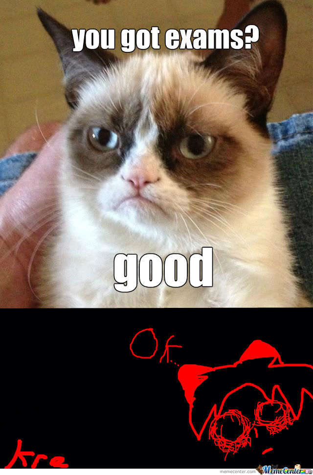 Grumpy Cats View On Exams