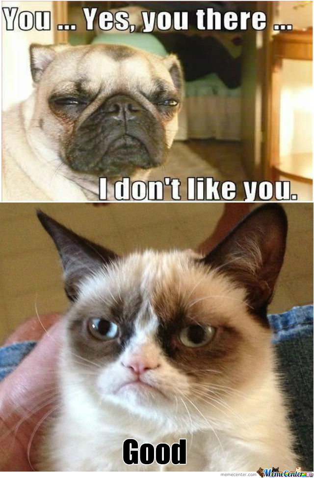 grumpy dog vs grumpy cat take 2_o_938108 grumpy cat memes best collection of funny grumpy cat pictures,Meme Grumpy Cat